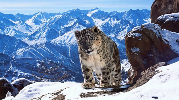 TNT - BBC captures nature in 4K for 'Planet Earth II' Cover